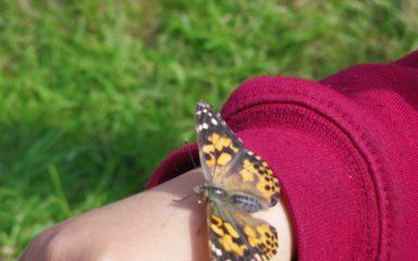 Butterfly Update!